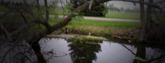 Kyle_Pond_Trees