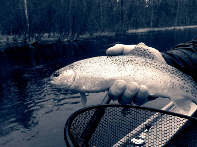 Pere_MArquete_River_Resident_RainbowTrout1